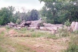Cottonwood stacks at Wilkins Tree Farm.