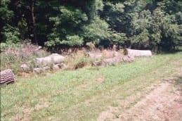 Oak logs at Wilkins Tree Farm.