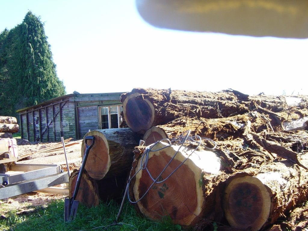 Redwood logs ready for sawing