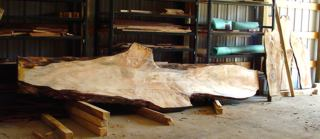 Stunning Silver Maple slab that was cut by Jeff Moskonas.