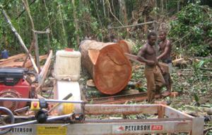 Walebarasialia (Wale) Tobata & his employees set up the Peterson Sawmill.