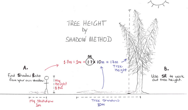 Tree Height by Shadow Ratio