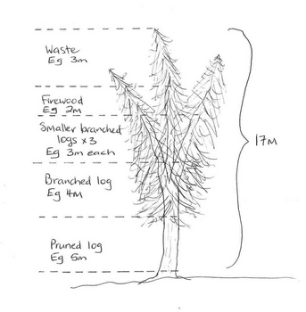 Tree recovery breakdown